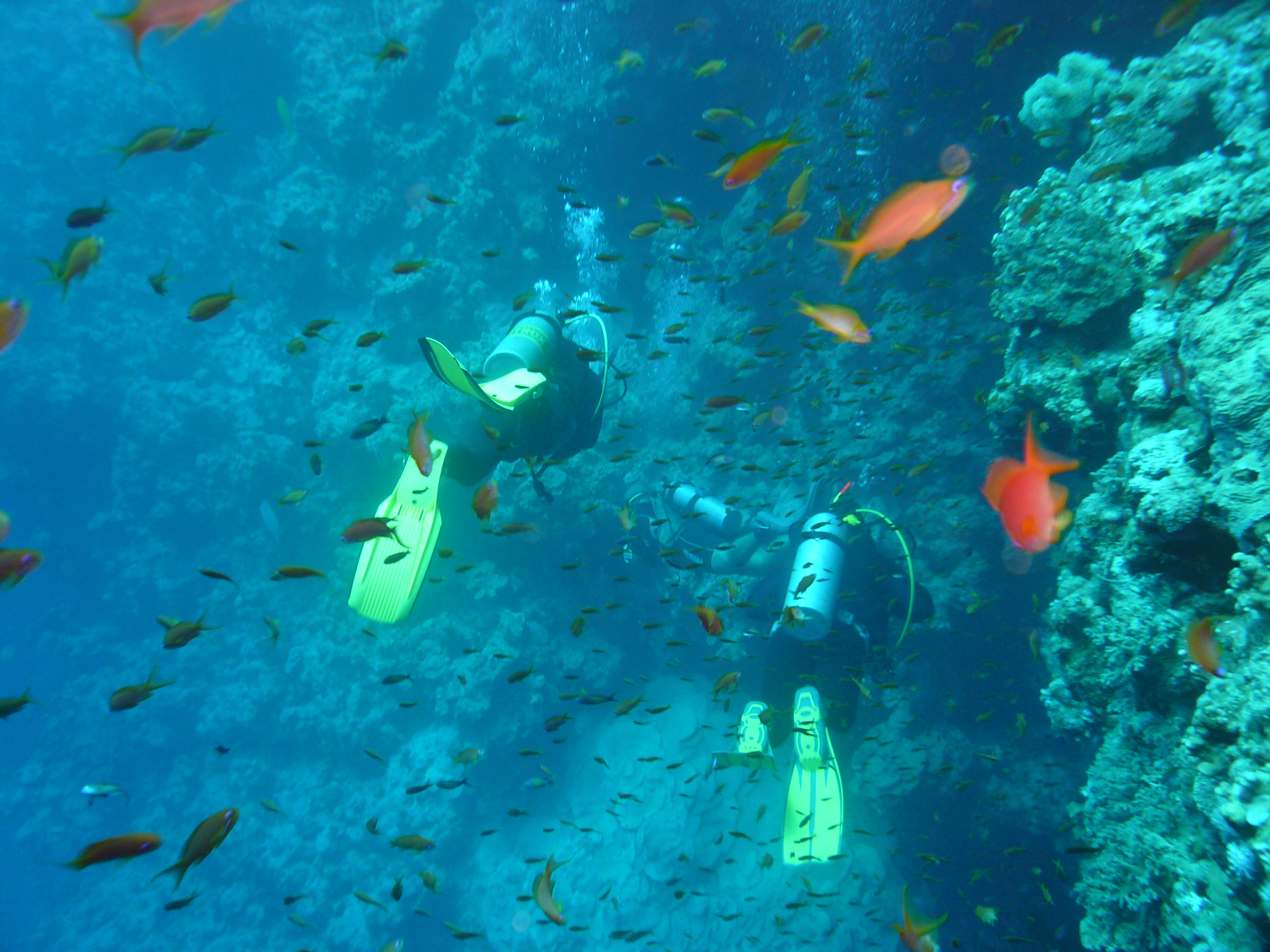 Bells - Blue hole - Sunsplash Divers Club - Dahab - Sinai - Ägypten