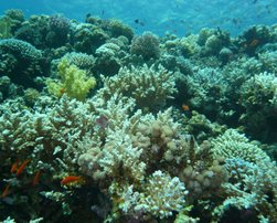 Islands - Sunsplash Divers Dahab Egypt