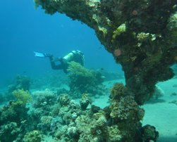 Canyon garden - Sunsplash Divers Dahab Egypt