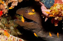 Moray garden - Sunsplash Divers Dahab Egypt